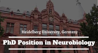 Heidelberg University PhD Position in Neurobiology in Germany, 2020