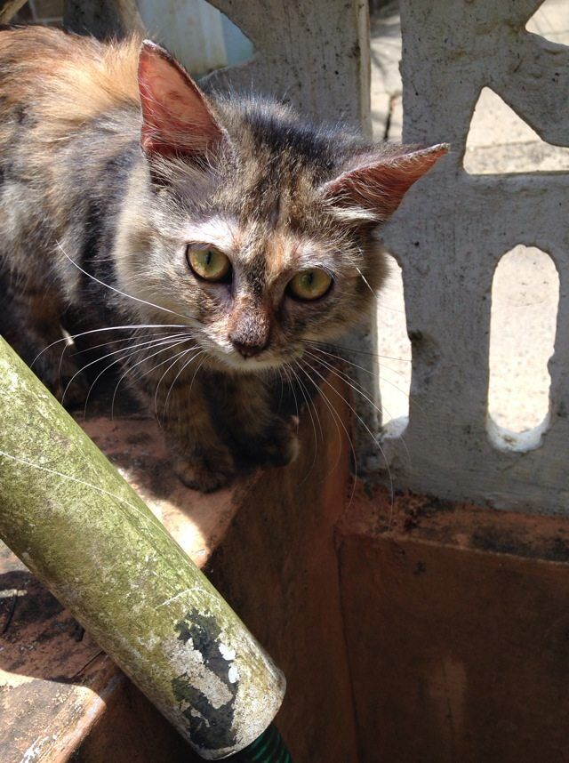Bold Looking Cat Free Photo 1