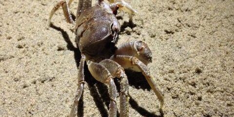 Crab on Sand Free Photo 21