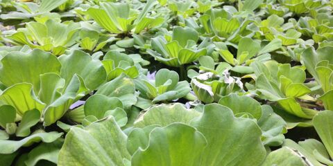 Leaves in Pond Free Photo 7